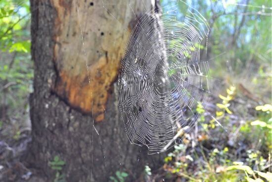 spiderweb in nature on sunny day